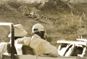 Leopard viewing-
