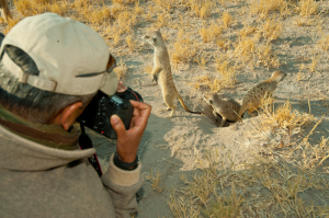 On Safari Photographing meerkats-6723