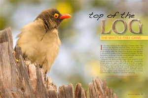 Oxpecker article