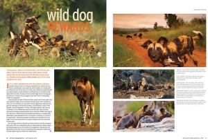 wilddog article