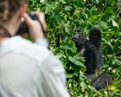 Bwindi Gorilla Viewing